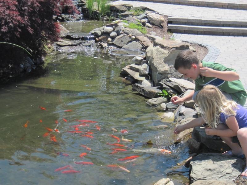 Water Gardening Harken 39 S Landscape Supply Garden Center East Windsor Ct