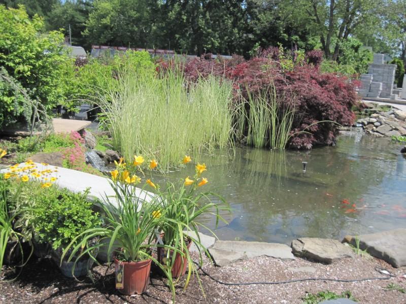 Water Gardening Harken S Landscape Supply Amp Garden